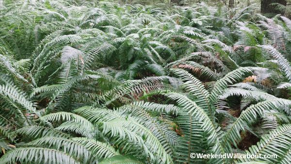 fern-patch